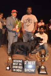 DARSHALE KENNEL PRESENTS CH. PARENT ROTTWILER PUPPIES FOR SALE IN PUNE