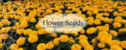 Buy garden seeds online in India | Biocarve