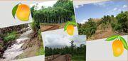 Mango County Farmhouse Project,  Malshej
