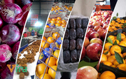 Fruit export company