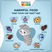 Buy Cat Food and accessories Online at best prices- Petoly