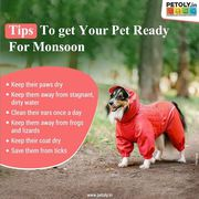 Buy Dog Grooming products online from Petoly.